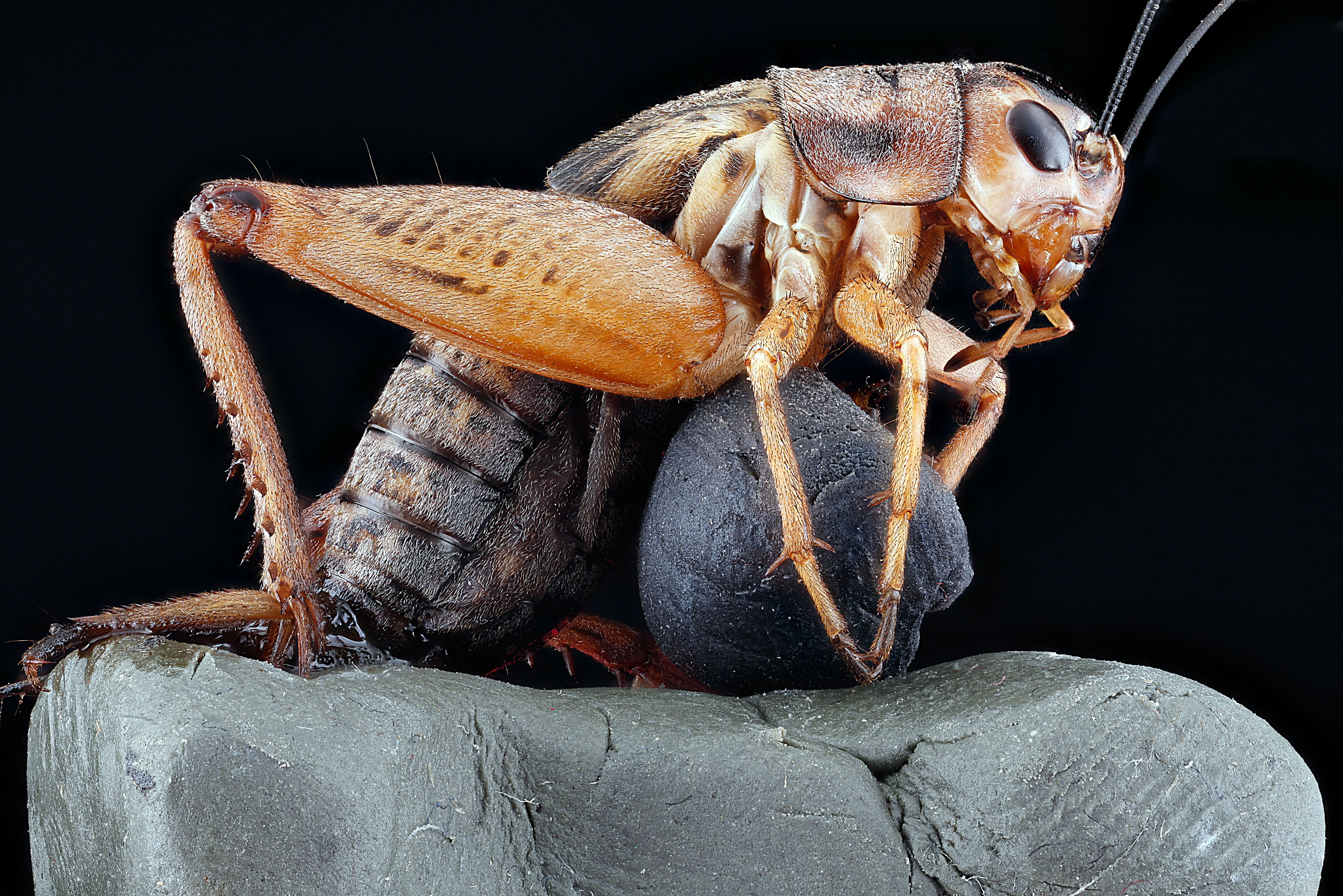 Интересни факти за хлебарката, които не знаете